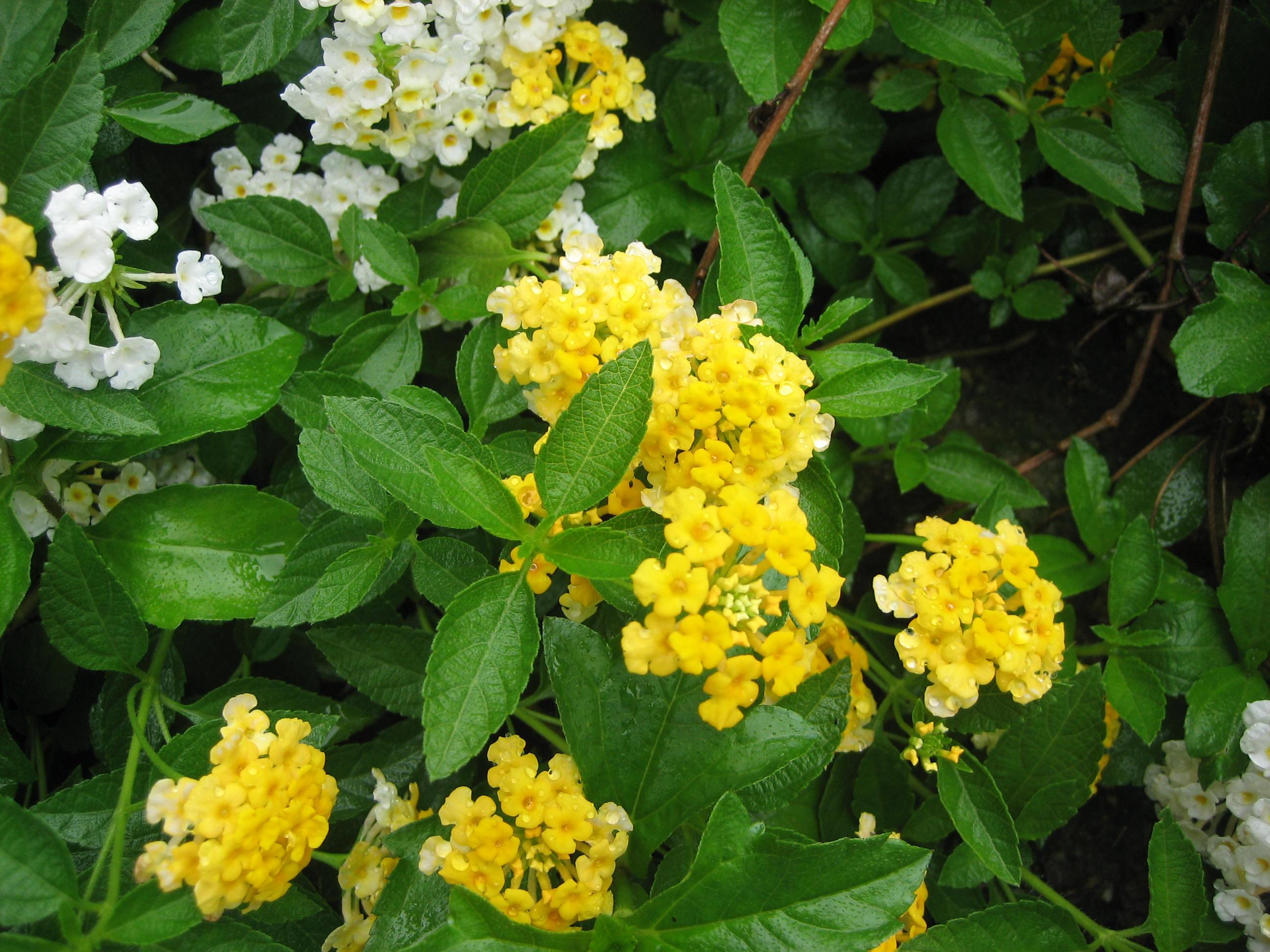 花の画像 p1_39